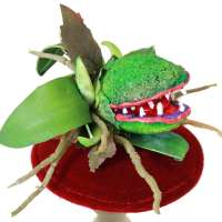 Feed me, Seymor - Fascinator mit fleischfressender Pflanze