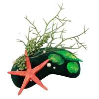 Green velvet fascinator with starfish & shells
